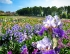 Win free tickets to the 64th Iris Festival at the Château de Vullierens